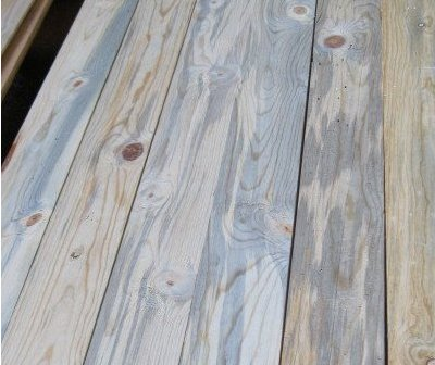 Blue Stain Beetle Kill Pine